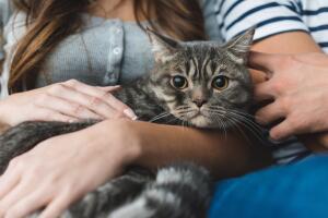 Насколько опасны кошки?