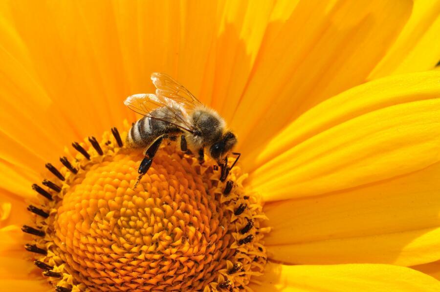 Пчела «говорит», что она нашла корм и сколько метров до него лететь