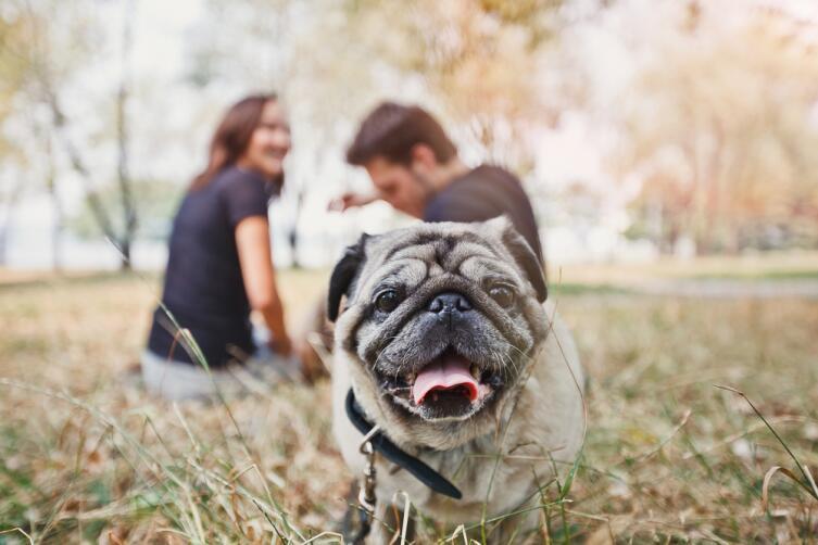 Даже прогулка с собакой может стать источником дохода