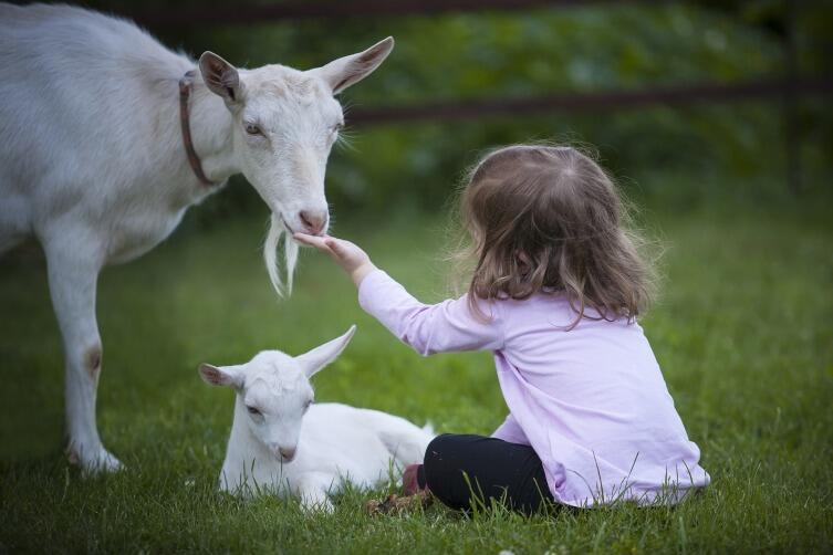 Зачем детям домашние животные?
