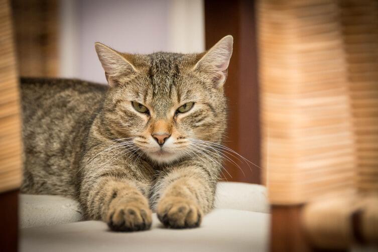 Жизнь кошки. Какой она бывает?
