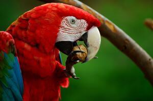 Может ли домашний попугай быть шпионом? Животные как тайные агенты