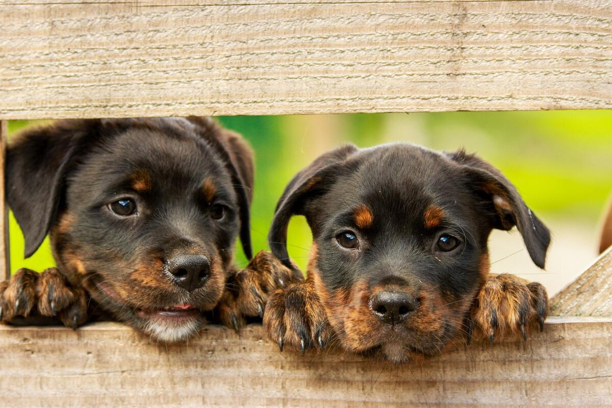 Как правильно воспитать и выдрессировать щенка? Часть 1