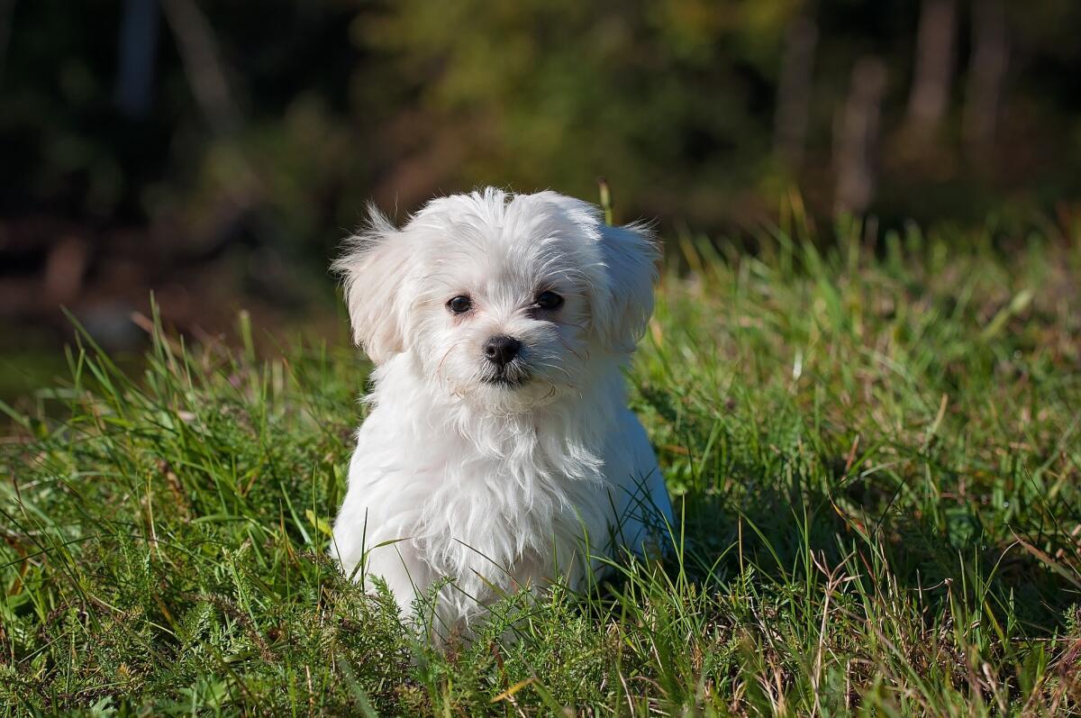 Как правильно воспитать и выдрессировать щенка? Часть 2