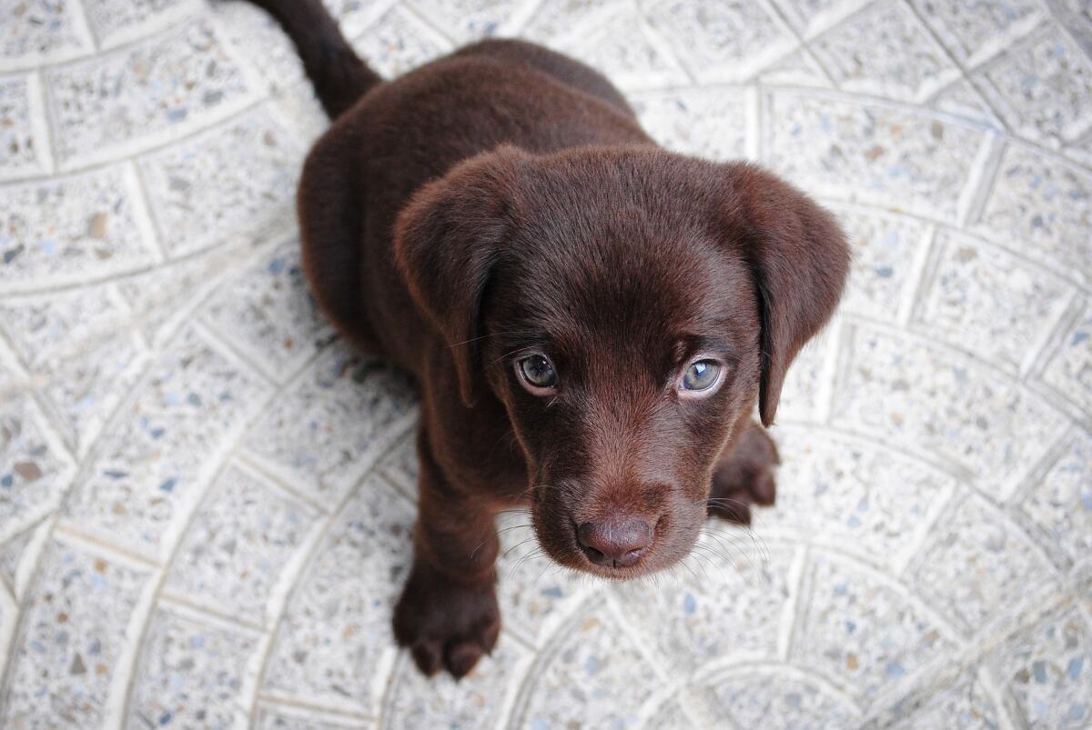 Как правильно воспитать и выдрессировать щенка? Часть 3