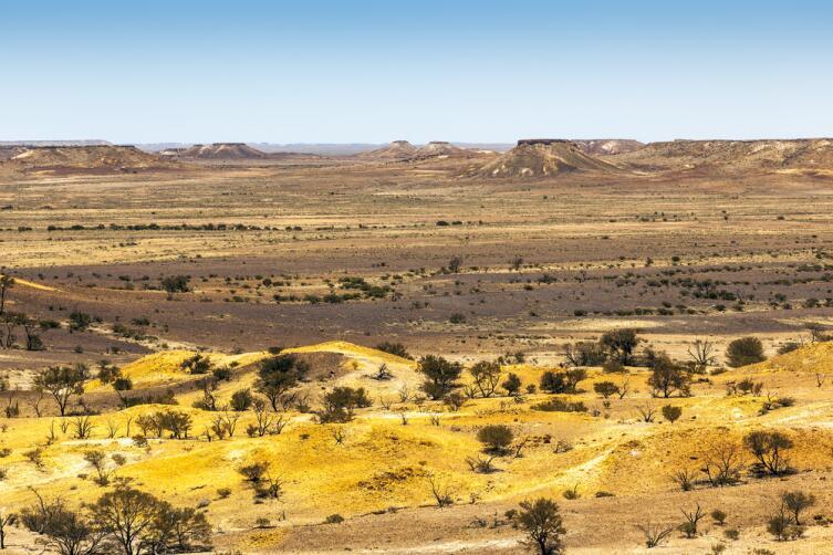 Австралийские буши скрывают немало золота...