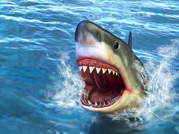 Правила общения с акулой: сразу бить в нос или обнять и погладить?