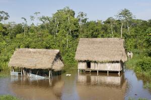 Как живут дикие племена в современном мире?