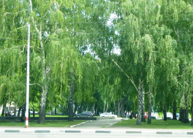 Гончаровский сквер