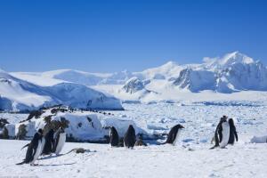 Есть ли сегодня жизнь в Антарктиде? Под толщей льда