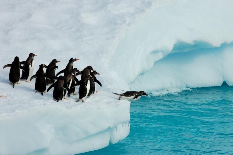 Есть ли сегодня жизнь в Антарктиде? В море и на земле