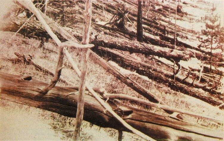 «Ореольный бурелом» в районе тунгусского события, по материалам экспедиции Л. Кулика, 1929 г.