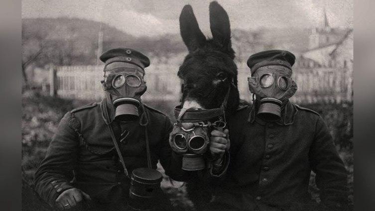 Немецкие солдаты и мул в противогазах