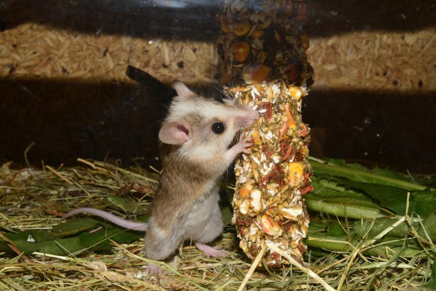 Как мышонок Тишка стал детективом? Сказка