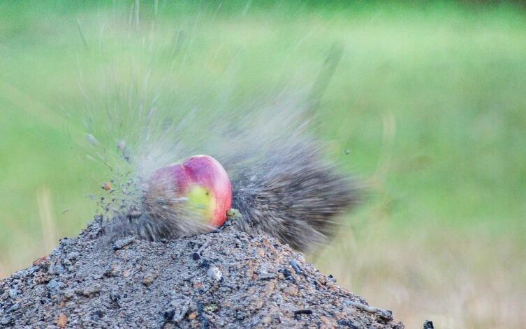 Попадание пульки пневматической винтовки в яблоко