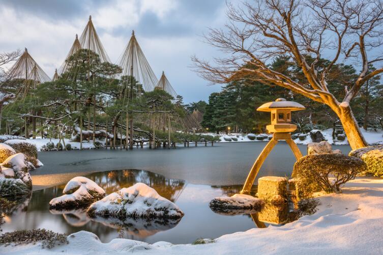 Японское новогоднее дерево - сосна