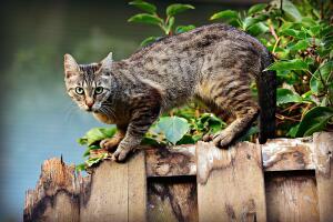 Как узнать, что у кота глисты?