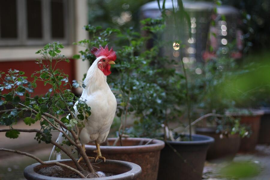 На что способны куриные мозги?  Часть 7