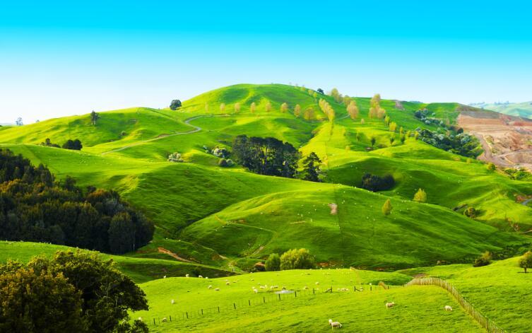 Холмы в Новой Зеландии