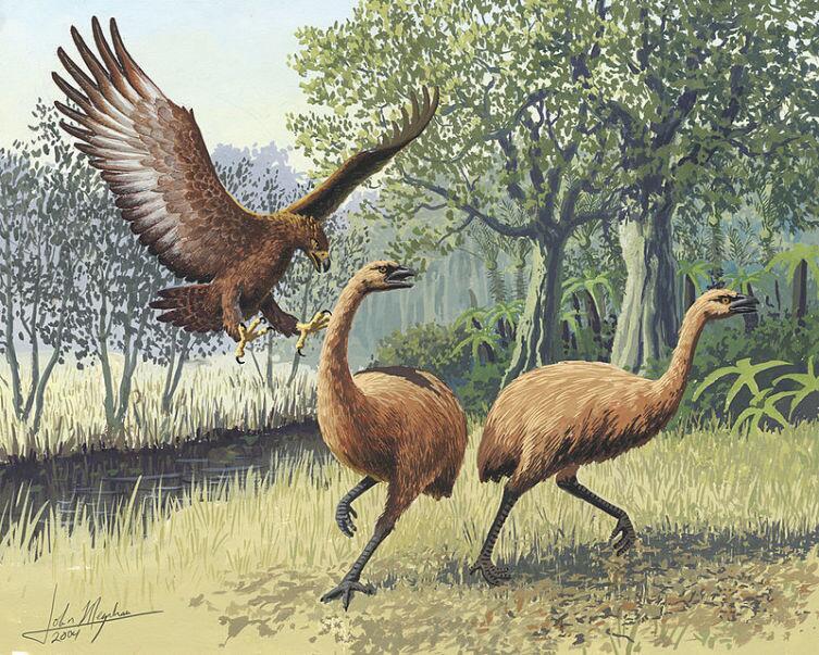 Орел охотится на птиц моа