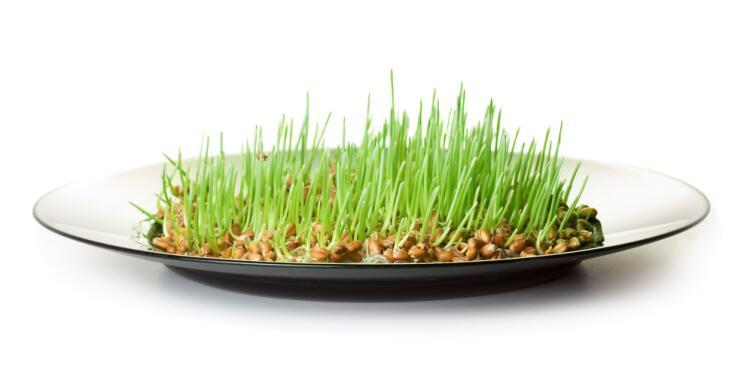 Пророщенное зерно становится мягким без тепловой обработки