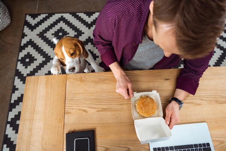 Из вашей еды собака не получит достаточно витаминов и макроэлементов