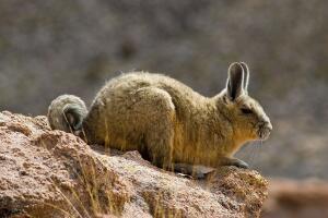 Замечательные фантазии природы. Какие «коллекционеры» бывают в мире животных?