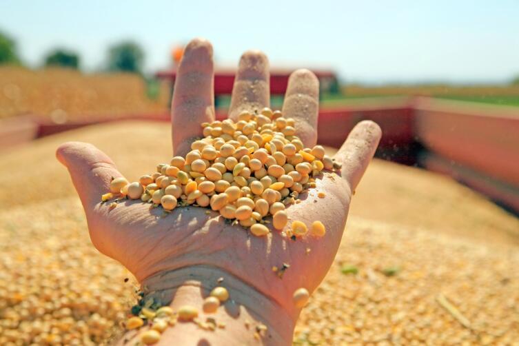 ГМО: что - правда, а что - ложь?
