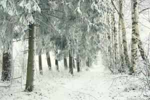 Коллембола - чудо природы, или Что за маковые зёрна на снегу?