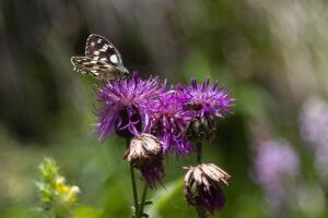 Чем полезны растения-адаптогены?