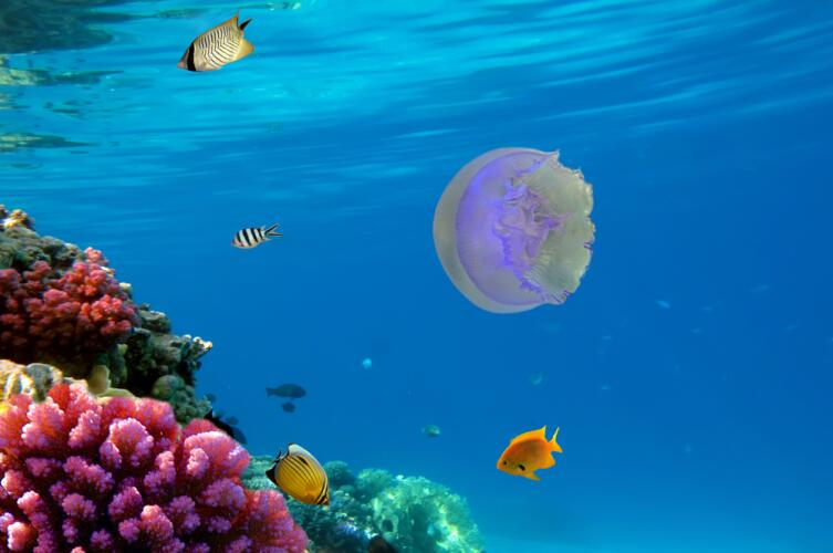 Лунная медуза