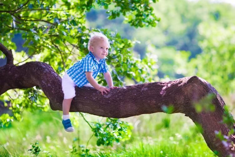 Ребенок считает, что лес нужен для того, чтобы он в нем гулял
