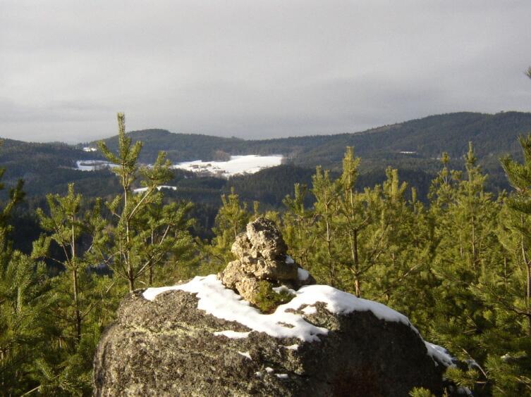 Лес в горах Нижней Австрии
