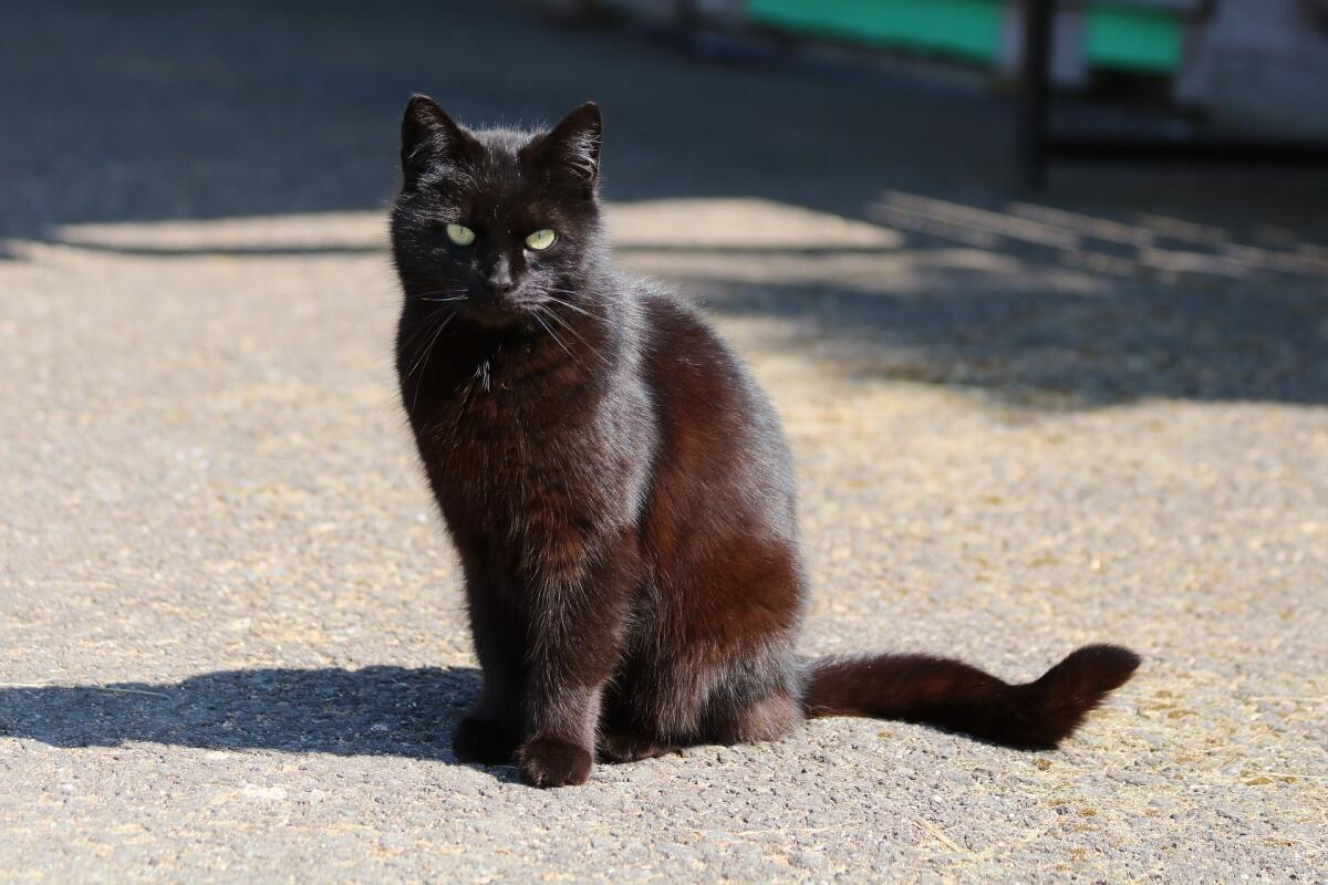 О чем расскажет кошкин хвост?