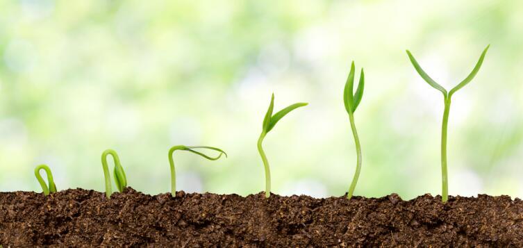 Советы огородникам: как получить крепкую и здоровую рассаду?