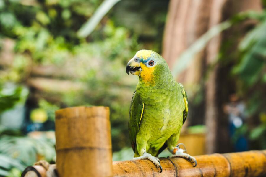 Как правильно выбрать попугая?