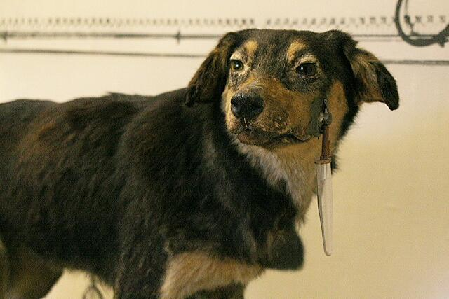 Собака Павлова, Музей Павлова, 2005 год