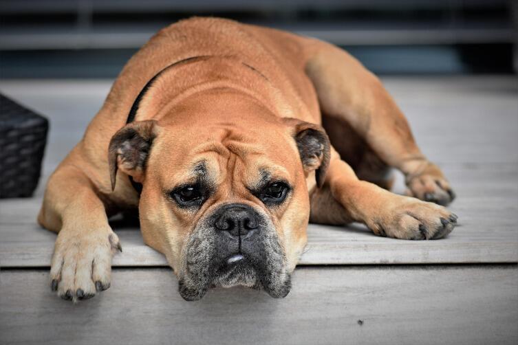 Чем отличается здоровая собака от больной?