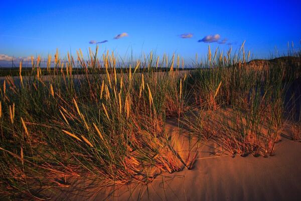 Зыбучие пески: какие тайны они скрывают?