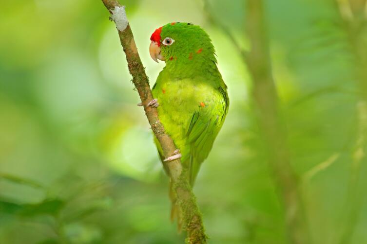 Как приручить попугая и научить его разговаривать и петь?