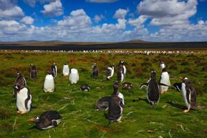 Живут ли в Африке пингвины?