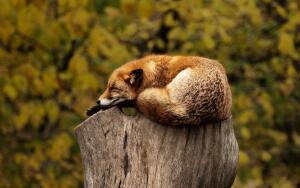 Международный день дикой природы: в чьих руках будущее планеты?