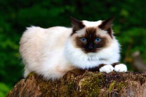 Что же нужно вашей кошке для чистоты и безопасности?..