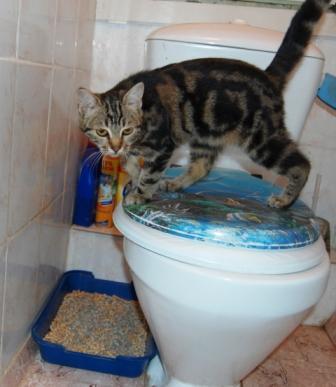 Как подобрать наполнитель для кошачьего туалета?