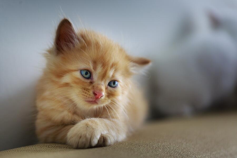 Завели котенка? Принимаем меры первой необходимости