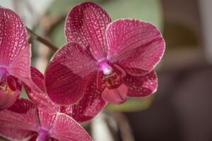 Не хотите выпить, или Как сохранить срезанные орхидеи? Личный опыт