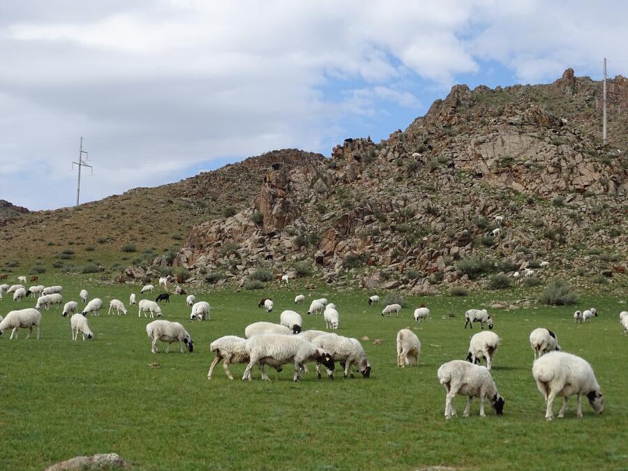 Нужно ли считать овец?