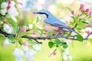 Весна: разумно ли слишком быстро выходить из «зимнего сна»?
