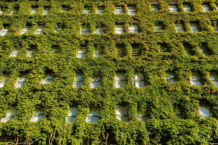 Чем хорошо вертикальное озеленение?
