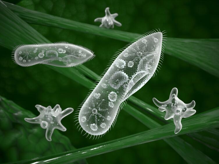 Чем больше планктона в воде, тем зеленее ее цвет